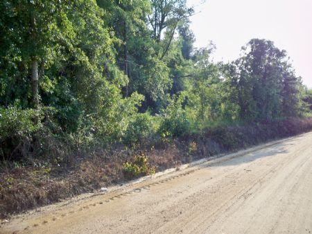 41 Acres - Great Investment : Kite : Johnson County : Georgia