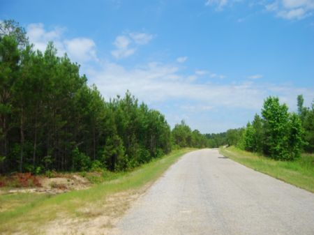 Riverfront, Hunting, Timber Invest. : Chester : Chester County : South Carolina