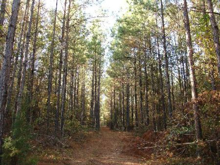 195 Acres In Crenshaw County : Highland Home : Crenshaw County : Alabama