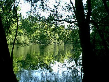 1,292 Ac W\ 6+ Miles River Frontage : Kingstree : Clarendon County : South Carolina