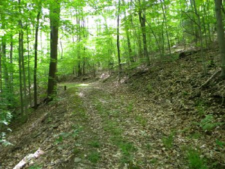 47+ Acres Woods Great Hunting : Newfield : Tompkins County : New York