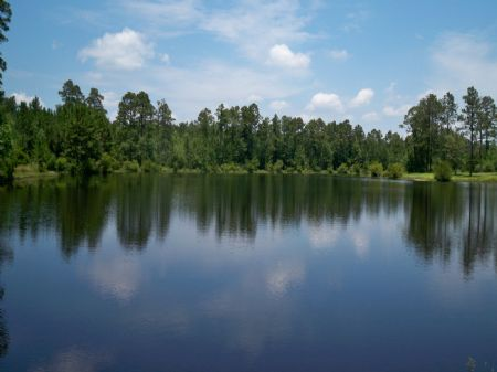 Must See 126 Acres With Pond : Swainsboro : Emanuel County : Georgia