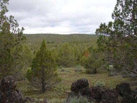 40 Ac Near Modoc National Forest : Alturas : Modoc County : California
