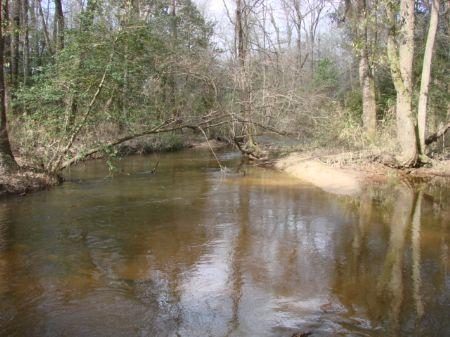 43 Acres With Big Creek : Ideal : Macon County : Georgia