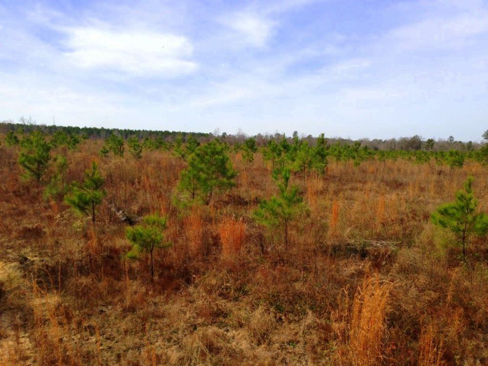 Hunters Ridge : Cochran : Dodge County : Georgia