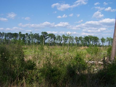 Horseshoe Tract - 805 acres : Walterboro : Colleton County : South Carolina