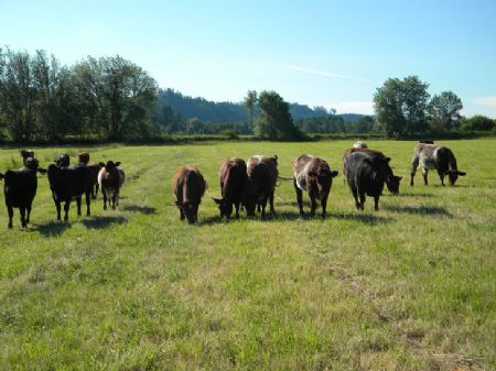 Pasture And River Frontage : Oakville : Grays Harbor County : Washington