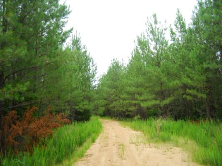 1076 Ac. Enoree River Tract : Laurens : Laurens County : South Carolina
