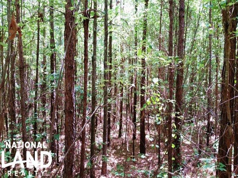 Tranquil Edgefield Homesite : Edgefield : Edgefield County : South Carolina