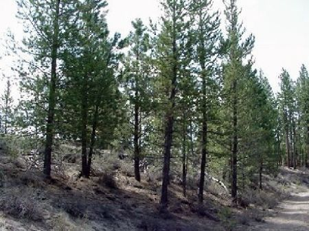 9.86 Acre Parcel Near Beatty : Beatty : Klamath County : Oregon