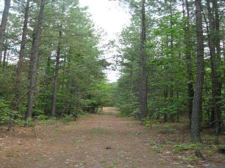 406 Acres Timberland : Columbia : Cumberland County : Virginia