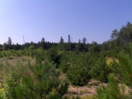 Tranquility @ Rock Bay Rd, Parcel 6 : Brainerd : Crow Wing County : Minnesota