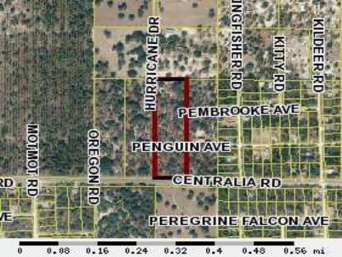 10 Acres : Brooksville : Hernando County : Florida