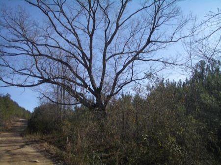 123 Acres Near Cave Spring : Cedartown : Polk County : Georgia