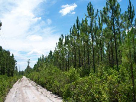 164 Acres Near Hilliard : Hilliard : Alachua County : Florida