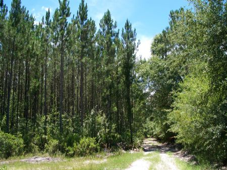 180 Acres Near Hilliard : Hilliard : Alachua County : Florida