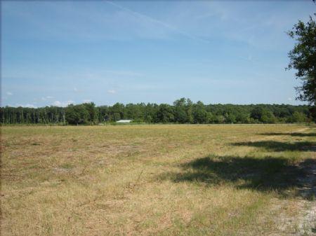 Real Estate Auction : Blackshear : Pierce County : Georgia