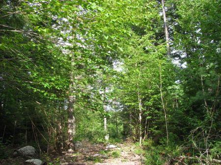 Grand Falls Acreage : Grandfalls : Penobscot County : Maine