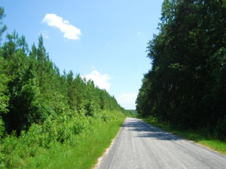 56 Acres Hunting Land : Pacolet : Union County : South Carolina