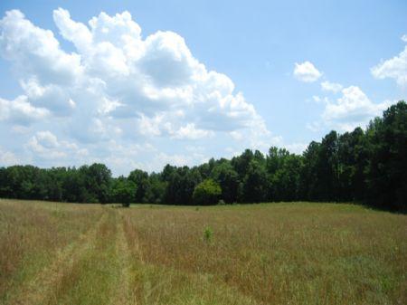 Cross Anchor 58 Acre Cattle Farm : Enoree : Spartanburg County : South Carolina