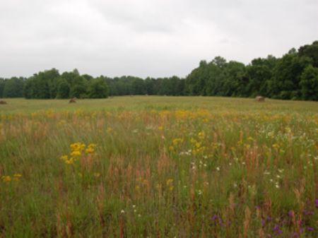 Heritage Land - 98 Acres : Madison : Morgan County : Georgia