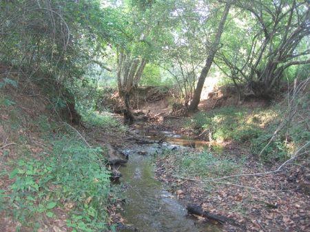 186 Acre With Multiple Good Creeks : Monticello : Jasper County : Georgia