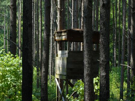 Lease A Hunter's Dream On The Ridge : Forrest City : Saint Francis County : Arkansas