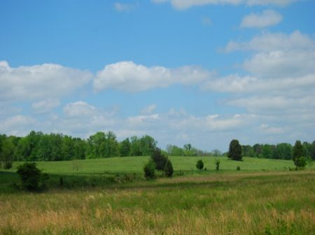 341 Acres For Cattle Or Hunting : Union : Union County : South Carolina