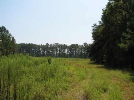 Wagon Branch North : Ridgeland : Jasper County : South Carolina
