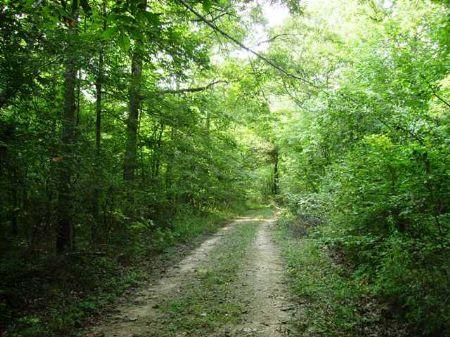 110 +/- Acres In The Mountains : Alread : Van Buren County : Arkansas