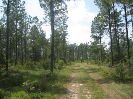Davis Bridge Tract : Williston : Barnwell County : South Carolina
