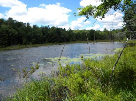 57 Acres 2 Ponds Owner Financing : Spencer : Tioga County : New York