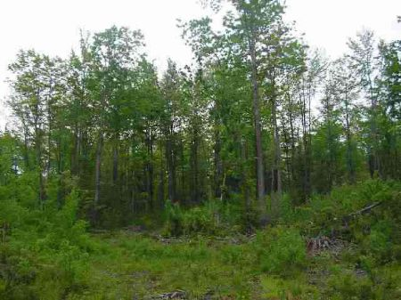 Lot 14 Indian Cemetary Mls #1073818 : L'anse : Baraga County : Michigan