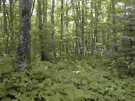 Lot 8 Indian Cemetary Mls #1045988 : L'anse : Baraga County : Michigan