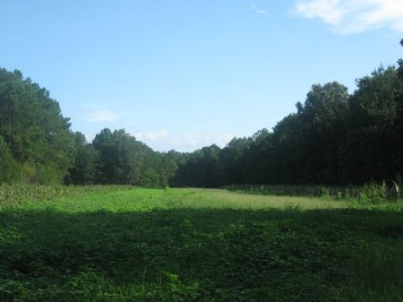 New River Tract : Levy : Jasper County : South Carolina