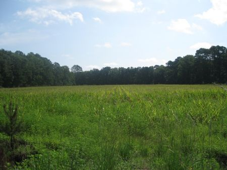 Walling Road Tract : Islandton : Colleton County : South Carolina