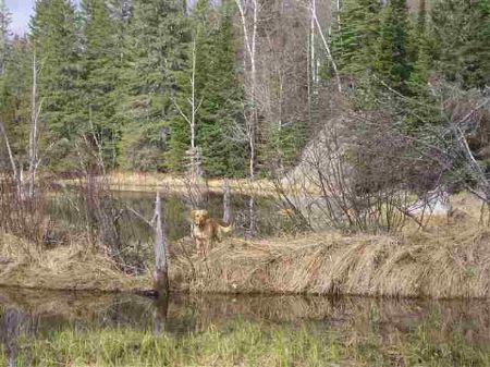 Tbd Off Wolf Lake Rd Mls #1042700 : Humboldt : Marquette County : Michigan