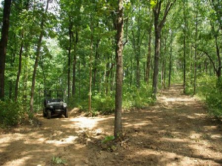 Armstrong West -  280 Ac Tract : Ashville : Saint Clair County : Alabama