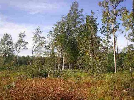 Tbd Gristmill Road  Mls #1055745 : Baraga : Baraga County : Michigan