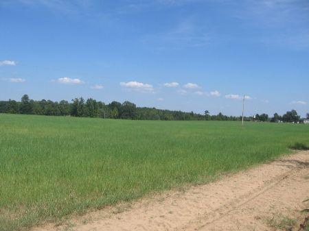 35 Acre Hay Field : Swainsboro : Johnson County : Georgia