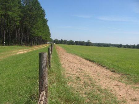 40 Acres Of Pasture : Swainsboro : Johnson County : Georgia