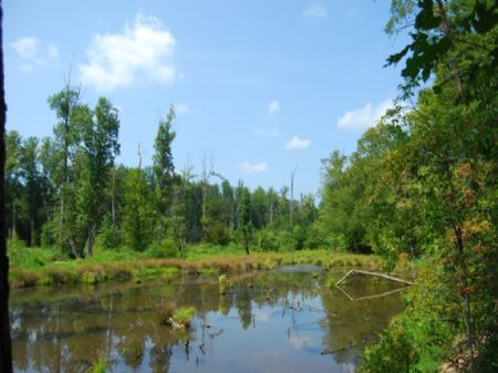 80 Acre Hunting Tract Near Pacolet : Pacolet : Spartanburg County : South Carolina