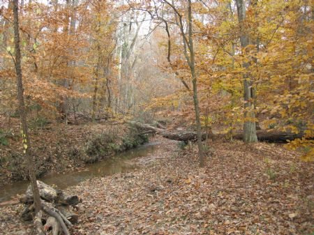 Timber Hunting Investment Reduced : Enoree : Spartanburg County : South Carolina