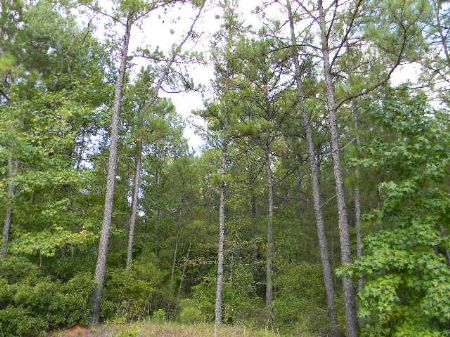 5 Acre Homesite : Montgomery : Alabama