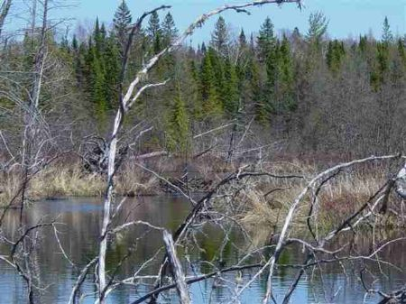 Tbd Ned Lake Rd Parcel2 Mls#1038194 : Michigamme : Baraga County : Michigan