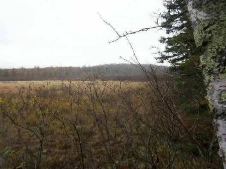 Off Drummond Lake Rd Mls #1074825 : Covington : Baraga County : Michigan