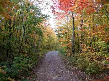 Tbd Woods Road  Mls #1056003 : Ishpeming Township : Marquette County : Michigan