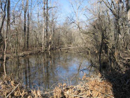 228+/- Acres : Effie : Rapides Parish : Louisiana