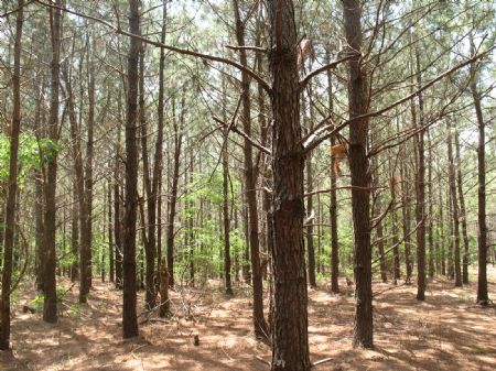 Tract #8938 : Kershaw : Kershaw County : South Carolina