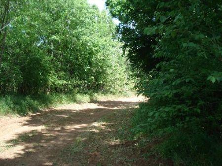 196+/- Acres : Cheneyville : Rapides Parish : Louisiana